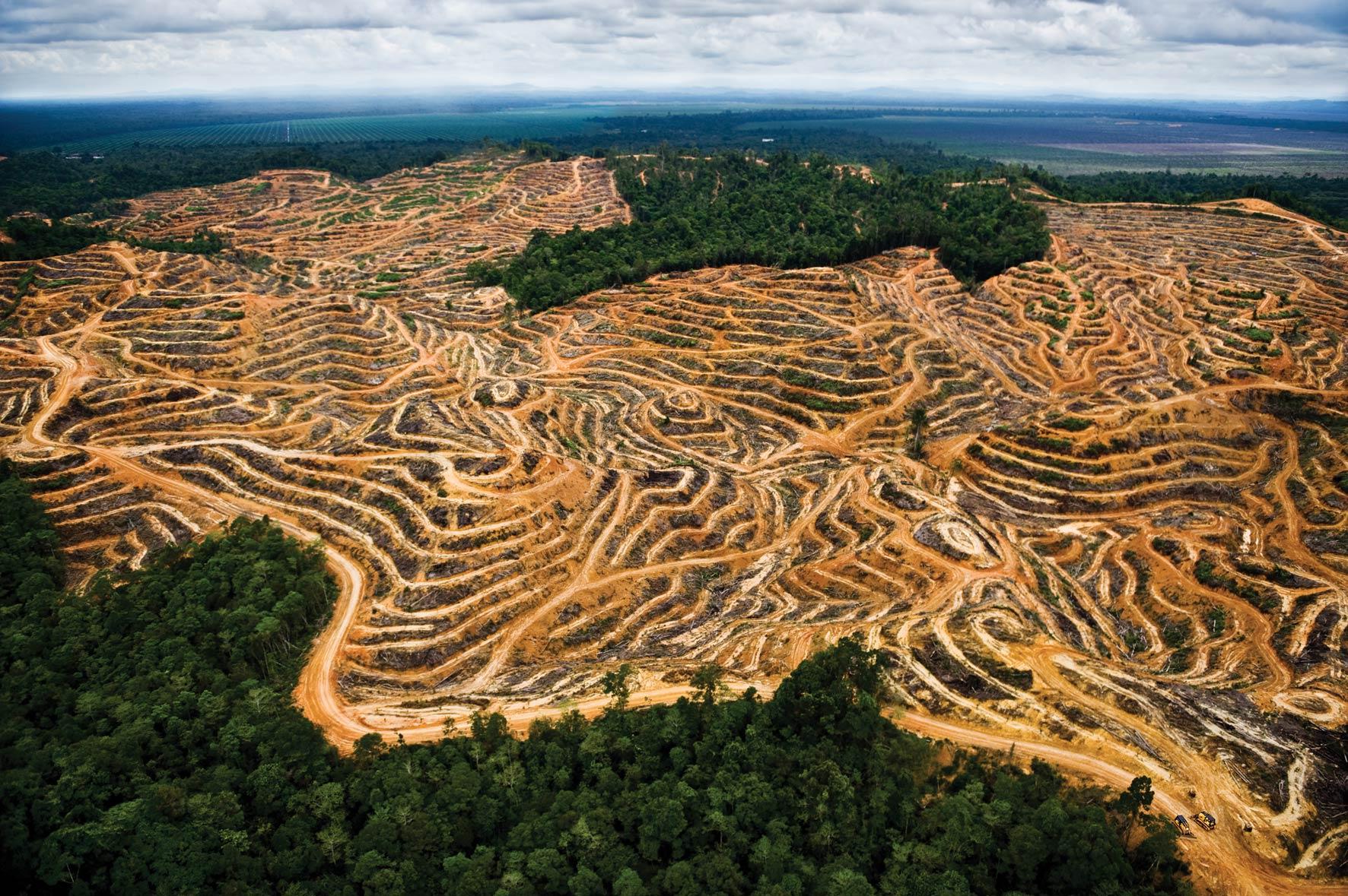 Fotos da amazonia antes do desmatamento 3