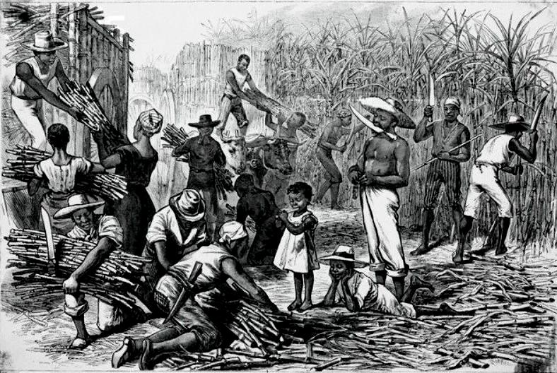 effects of sugar revolution in the caribbean The basic themes of sugar, slavery and racism are already here, but the   something used to dramatic effect in the anonymous novel, hamel, the obeah   in the british caribbean was the success of the haitian revolution,.