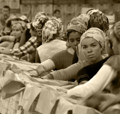 Workers at a fruit packing plant in Italy. Giancarlo / Flickr
