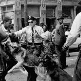 A civil rights protester attacked by police dogs in Birmingham, AL in 1963. Bill Hudson