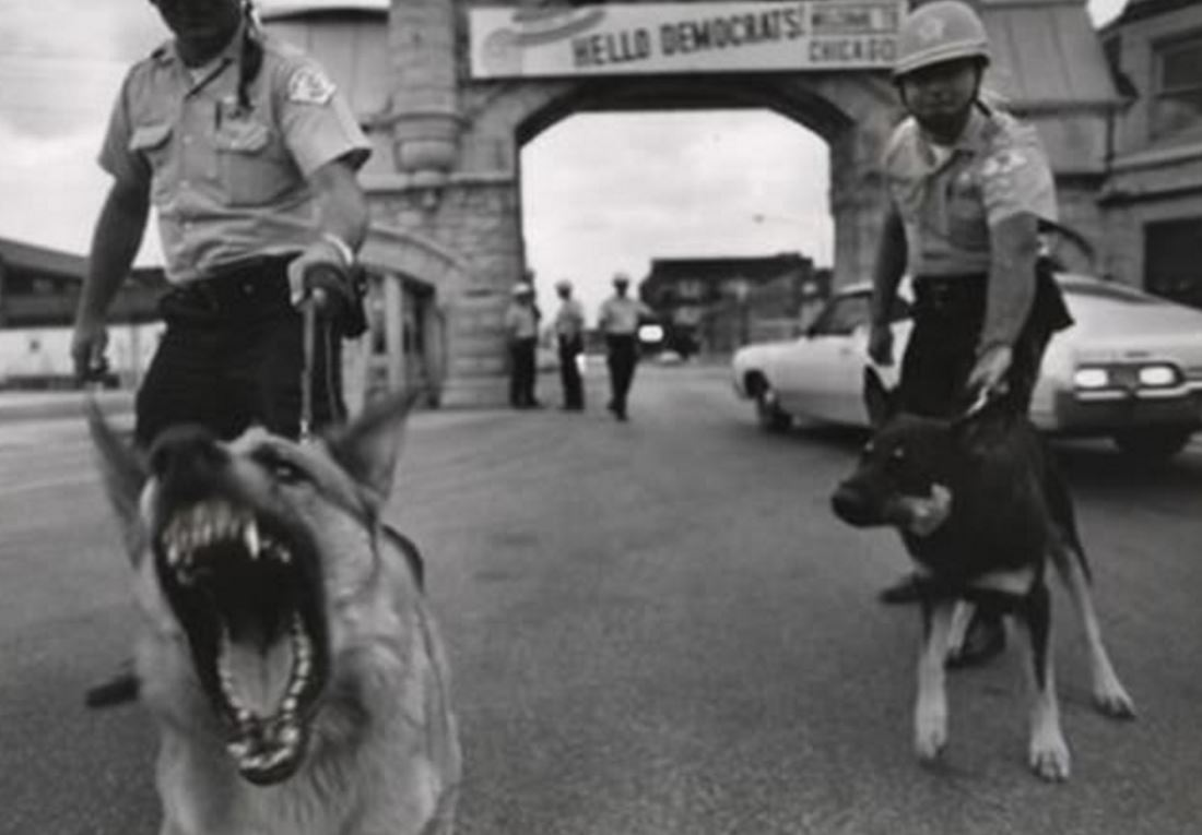 Police dogs at the 1968 Democratic National Convention in Chicago, IL. Casa del libro