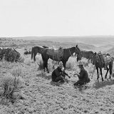 Cowboys in Matador Range, Texas in 1909. Erwin E. Smith