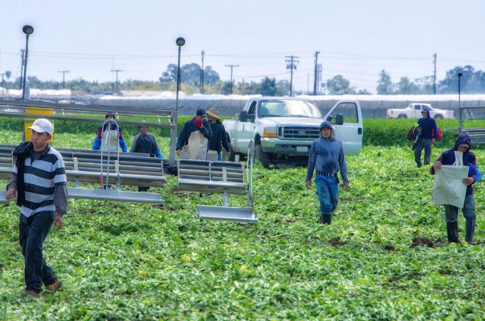 Farmworkers in Southern California. Russ Allison Loar / Flickr