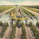 A postcard illustrating mechanized farming in Ruskin, Florida, 1930-1945. Boston Public Library