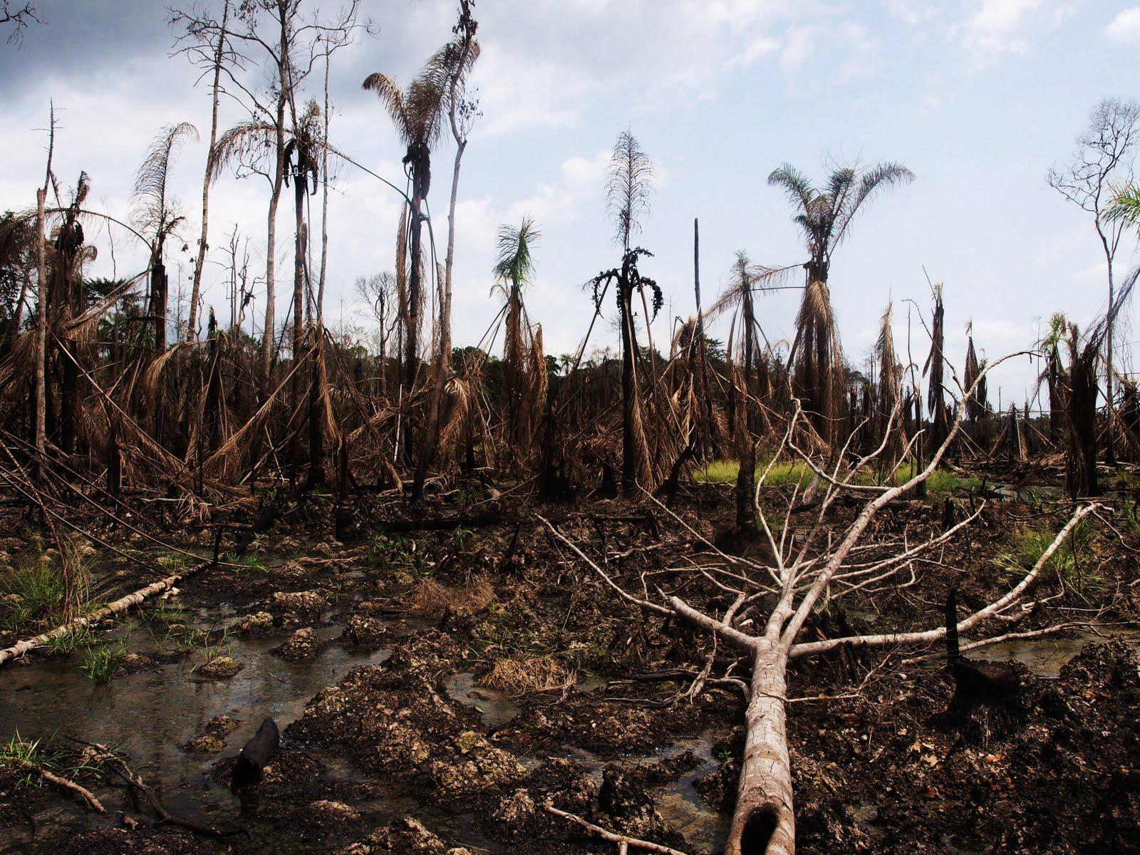 Niger Delta oil environmental disaster